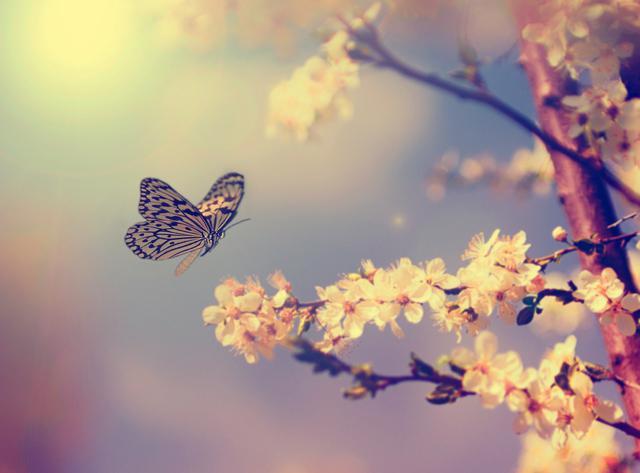 7-interesantes-datos-sobre-las-mariposas-que-van-a-fascinarte-1