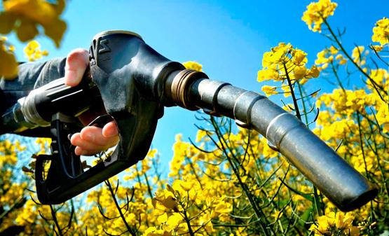 biocombustibles-Noel-Rodriguez