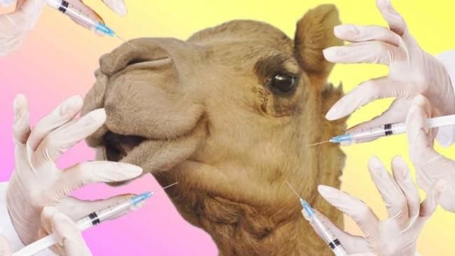 camello-botox-768x432